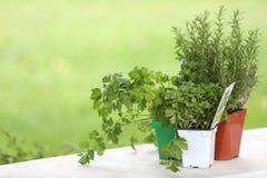 Drie gekleurde potten van aromatische planten op witte lijst Royalty-vrije Stock Afbeelding