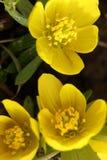 Drie gele bloemen in een tuin stock foto's