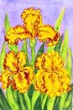 Drie gele lissen, het schilderen Stock Foto's