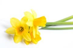Drie gele narcissen die op oppervlakte rusten Stock Fotografie