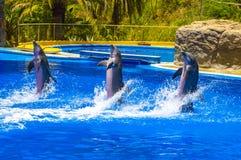 Drie gelukkige dolfijnen die in het water dansen stock foto's