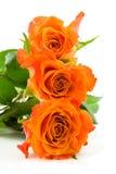 Drie gestapelde oranje rozen Royalty-vrije Stock Fotografie