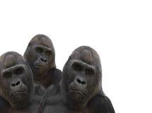 Drie gorilla's stock fotografie