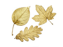Drie gouden bladeren Stock Afbeelding
