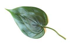 Drie groene bladeren Royalty-vrije Stock Afbeeldingen