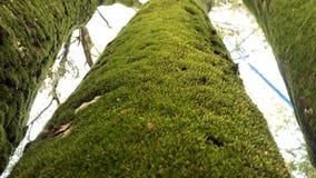 Drie Groene die bomen door slib worden behandeld stock afbeelding