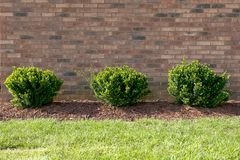 Drie groene struiken op een rij royalty-vrije stock foto
