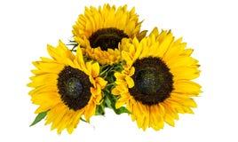 Drie Grote Gele die Zonnebloemen op witte Achtergrond worden geïsoleerd De herfst en de Recente Zomerbloem stock foto's