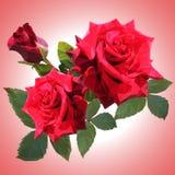 Drie grote rode rozen zijn lage poly vector illustratie