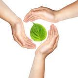 Drie handen met groen blad stock afbeeldingen