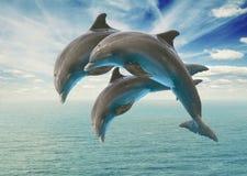 Drie het springen dolfijnen Royalty-vrije Stock Foto