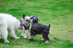 Drie honden Royalty-vrije Stock Foto