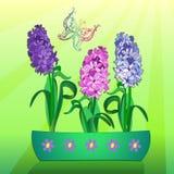 Drie hyacinten Royalty-vrije Stock Afbeelding
