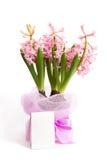 Drie hyacintinstallaties met nota Royalty-vrije Stock Afbeelding