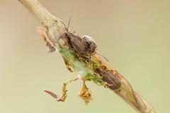 Drie insecten royalty-vrije stock foto
