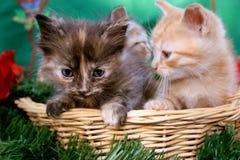 Drie katjes Royalty-vrije Stock Foto