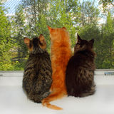 Drie katjes Stock Afbeeldingen