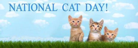 Drie katjes in lang gras met blauwe hemel witte pluis als achtergrond Stock Foto