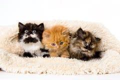 Drie katjes onder deken Stock Foto's