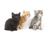 Drie katjes op een witte achtergrond Stock Foto