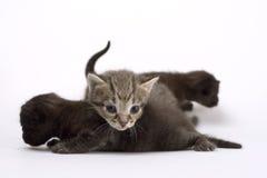 Drie katten Royalty-vrije Stock Foto