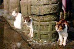 Drie katten Stock Foto's