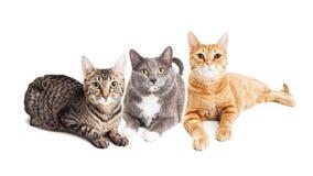 Drie Katten die samen op Wit leggen stock foto's
