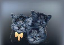 Drie katten op dark Royalty-vrije Stock Afbeelding