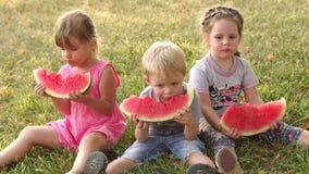 Drie kinderen eten watermeloen in groen de zomerpark stock video