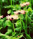 Drie kleine bloemen of is het vier stock afbeelding