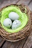Drie kleine eieren in vogelnest Royalty-vrije Stock Foto