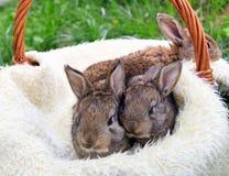 Drie kleine en mooie konijntjes stock afbeeldingen