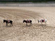 Drie kleine ezels royalty-vrije stock foto
