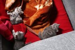 Drie kleine katjes Royalty-vrije Stock Foto