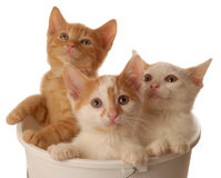 Drie kleine katjes Stock Afbeelding