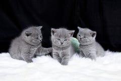 Drie kleine katten Royalty-vrije Stock Afbeelding