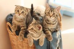 Drie kleine katten Royalty-vrije Stock Foto