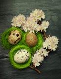 Drie kleine kwartelseieren in zij uiterst kleine groene nesten met de roze lente Royalty-vrije Stock Foto's
