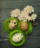 Drie kleine kwartelseieren in zij uiterst kleine groene nesten met het ontspannen FL Stock Afbeeldingen