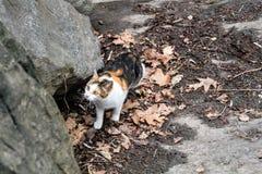Drie Kleur Cat Wandering bij Central Park, New York royalty-vrije stock afbeeldingen