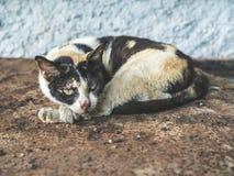 Drie kleuren dakloze blinde kat Vuile eenzame kat die met één oog kijken royalty-vrije stock afbeelding