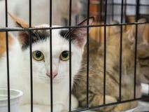 Drie kleurenkatten in kooi van het dierlijke hoge ISO beeld van de hulpstichting Stock Afbeeldingen