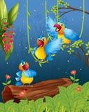 Drie kleurrijke papegaaien Stock Afbeeldingen
