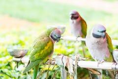 Drie kleurrijke papegaaien Stock Fotografie