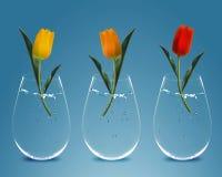 Drie kleurrijke Tulpen Stock Afbeeldingen