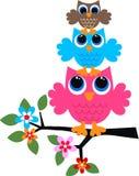 Drie kleurrijke uilen Stock Afbeeldingen
