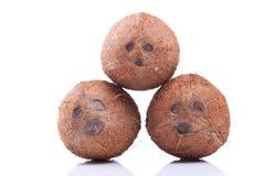 Drie kokosnoten Royalty-vrije Stock Afbeelding