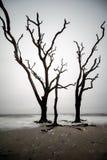 Drie lange bomen die zich in de stille branding bevinden stock foto