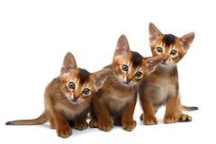 Drie Leuke Abyssinian Kitten Sitting op Geïsoleerde Witte Achtergrond Royalty-vrije Stock Fotografie