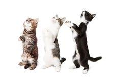 Drie Leuke en Katjes die bevinden zich bedelen Stock Afbeeldingen